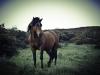cavehill-horse-1385087-s